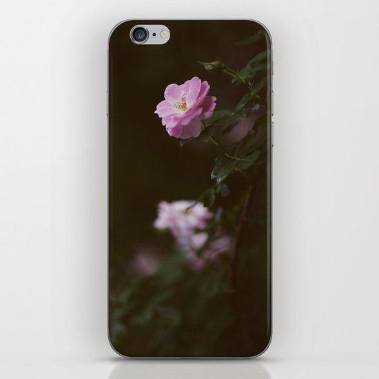 Rose #1 iPhone & iPod Skin