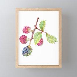 Wild Blackberries Framed Mini Art Print