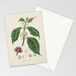 Coffee Bean Antique Botanical Illustration Stationery Cards