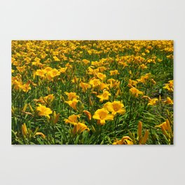 Yellow Flower Field Canvas Print