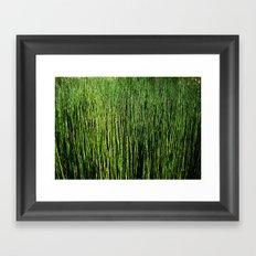 Wallgrass Framed Art Print