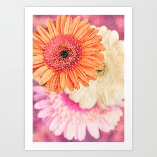 Sweet Daisy Sorbet Art Print