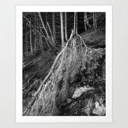 Timber IX Art Print