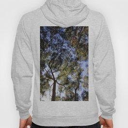 Eucalyptus Tree Canopy Hoody