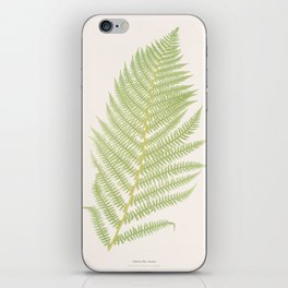 Ferns #2 iPhone Skin