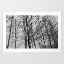 Lonely Crow Woods Art Print