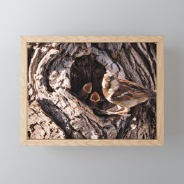 House Sparrow Keeping House Framed Mini Art Print
