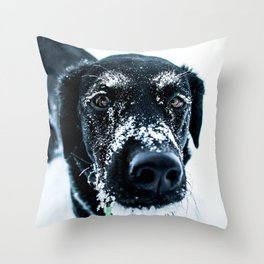Snow Dog // Cross Country Skiing Black and White Animal Photography Winter Puppy Ice Fur Throw Pillow