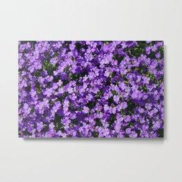 Violets Metal Print