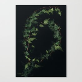 Hedera helix Canvas Print