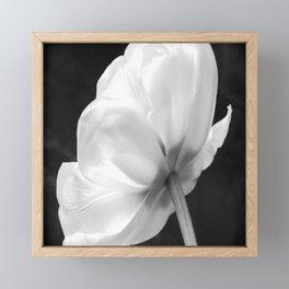 Close-up of white tulip in black background Framed Mini Art Print