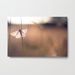 Butterfly on a blade of grass during the sunset Metal Print