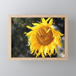 The sunflower and the bulbmebee Framed Mini Art Print