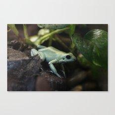 Mint Terribilis Poison Dart Frog Canvas Print