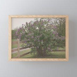 Lilac Bush Framed Mini Art Print