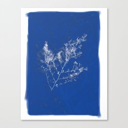 Cyanotype Canvas Print