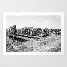 Field of Grapes Art Print