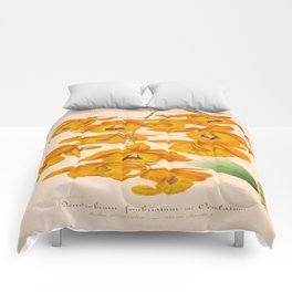 Dendrobium fimbriatum Vintage Botanical Floral Flower Plant Scientific Illustration Comforters