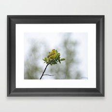 Yellow Warbler Framed Art Print