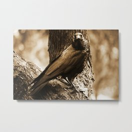 Raven Sees All Metal Print