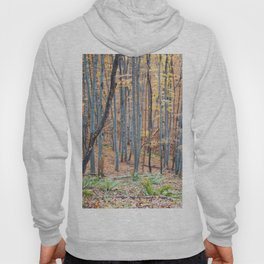 Dreamy forest No4 Hoody