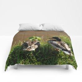 Ducking Around Comforters