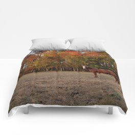Where is My Horse Hay? Comforters