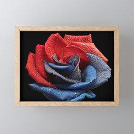 Raindrops On Rose Framed Mini Art Print