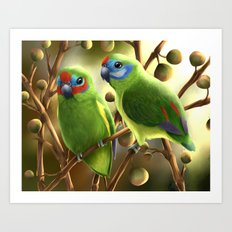 Double-eyed Fig Parrot Art Print