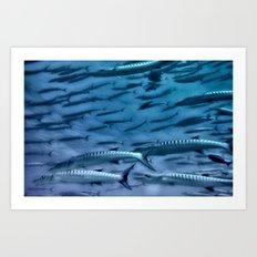 Barracuda! Art Print