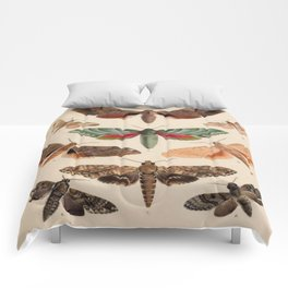 Vintage Natural History Moths Comforters
