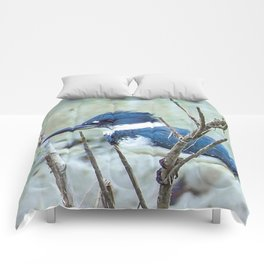Young Belted Kingfisher (Repost) Comforters
