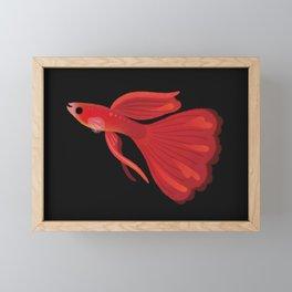 Red guppy Framed Mini Art Print