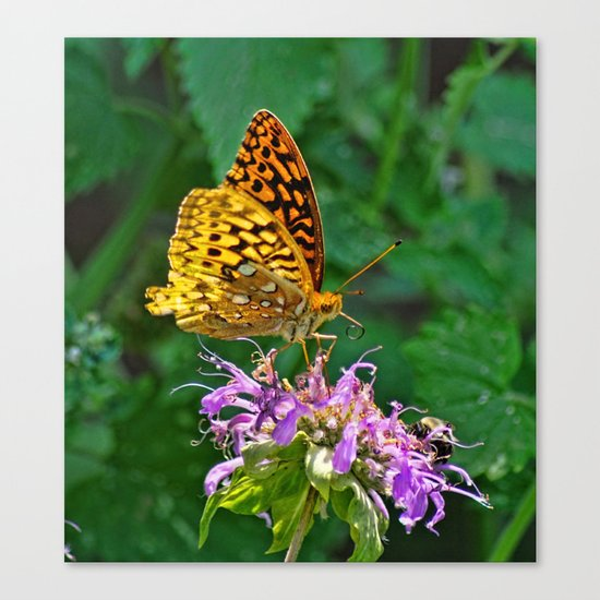 Love Is Like A Butterfly  Canvas Print