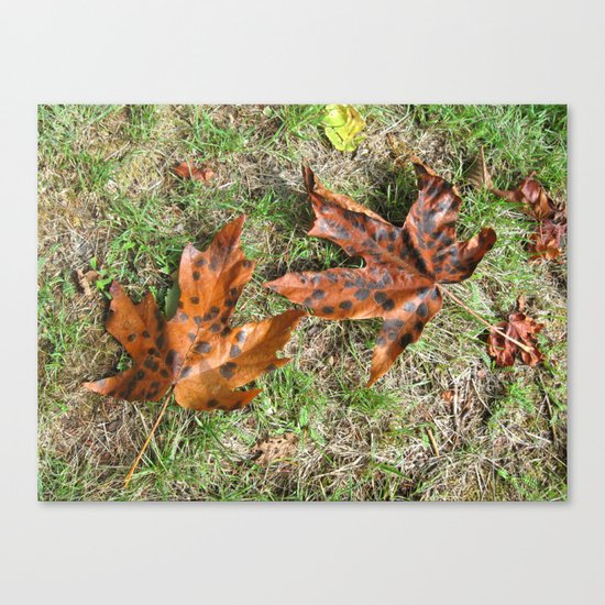 Fall Is Spot On Canvas Print