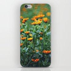 Orange Flowers #1 iPhone & iPod Skin