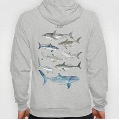Sharks Hoody