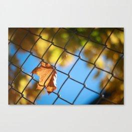 Fall leaf on a fence Canvas Print