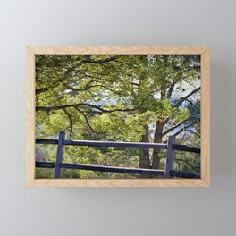 California Forest Landscape by Reay of Light Photography Framed Mini Art Print