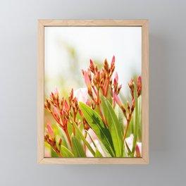 Nature photography Flower bud bloom I Framed Mini Art Print
