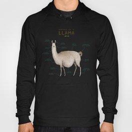 Anatomy of a Llama Hoody