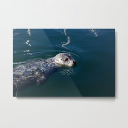 Seal Swims Metal Print