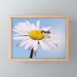 Ant On A Flower Framed Mini Art Print