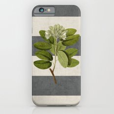 botanical stripes 5 -gray Slim Case iPhone 6