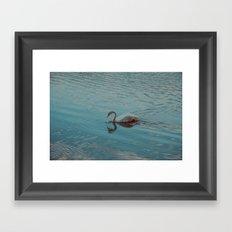 Swan lake in blue Framed Art Print