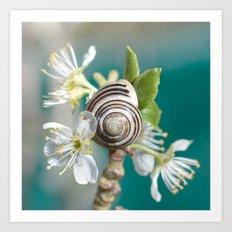 sea snail Art Print