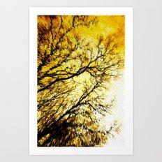 Morning Tree Tops Art Print
