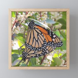 Monarch Mating Framed Mini Art Print