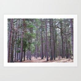 Hidden Trails Art Print