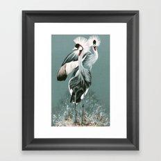 Crowned Cranes Framed Art Print